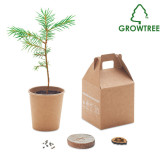 Growtree? - Pappersset av furu