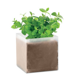 Mint - Compost with seeds