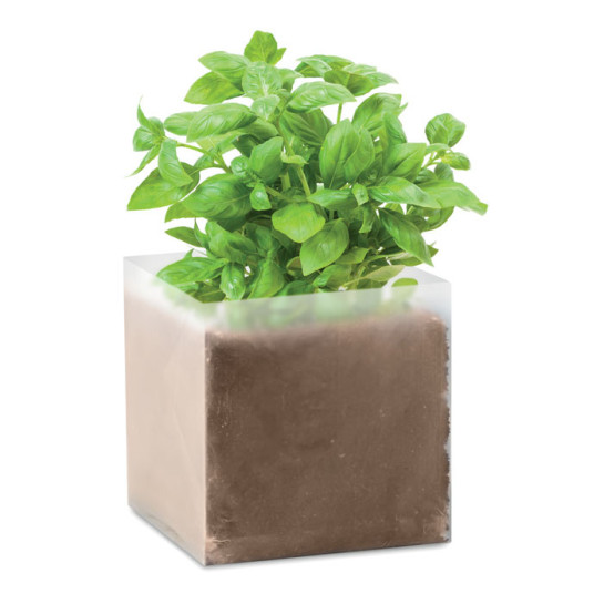 Basil - Compost with seeds \