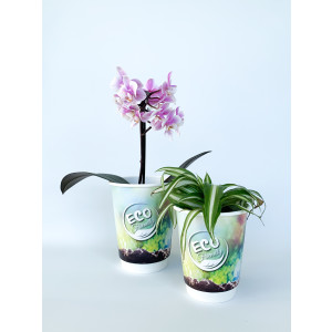 ECO pappersmugg DV 35cl/12oz